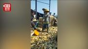 真·一夜暴富!渔民海域捕获6万斤黄花鱼,价值超百万