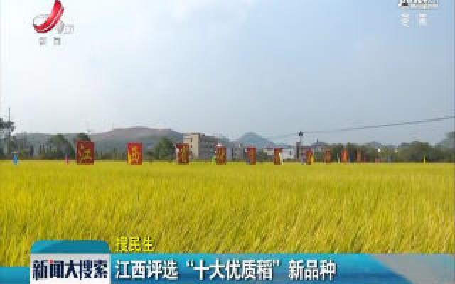 """江西评选""""十大优质稻""""新品种"""