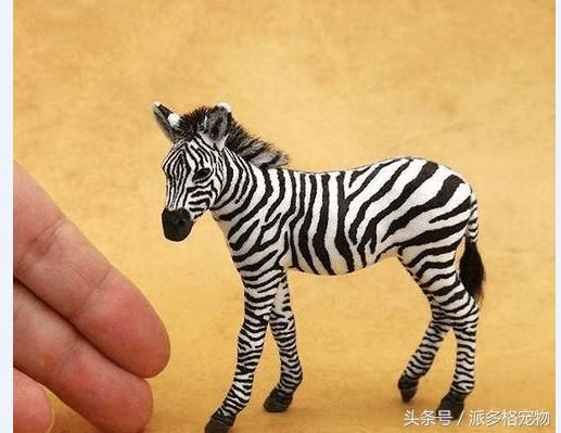 41年做了200个萌萌小动物,指尖上的宠物,萌翻所有人,你见过吗?