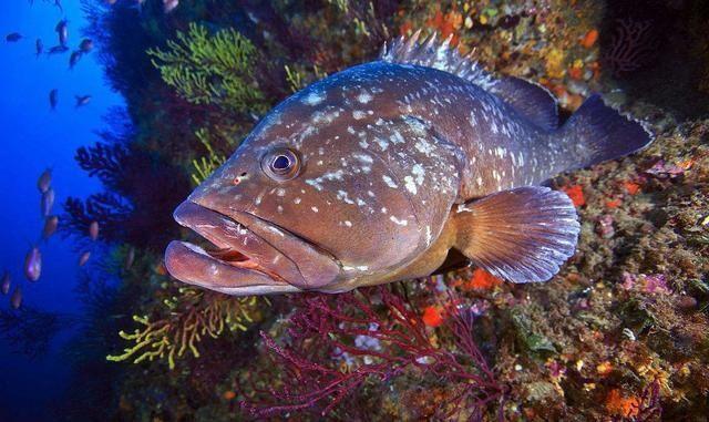 鱼的各个部位名称图解