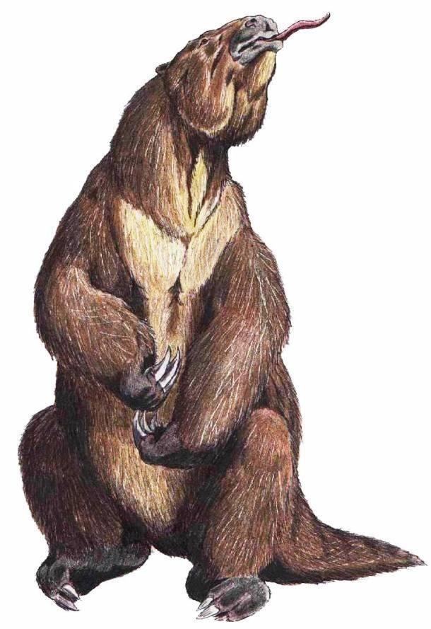 南美洲的特有物种,这是一个最大的陆地哺乳ag游戏直营网|平台,重达4吨,长达6米(20