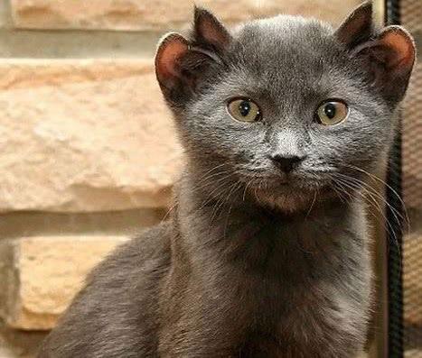 世界上最丑的八种动物第一名来自中国,它却无人认识