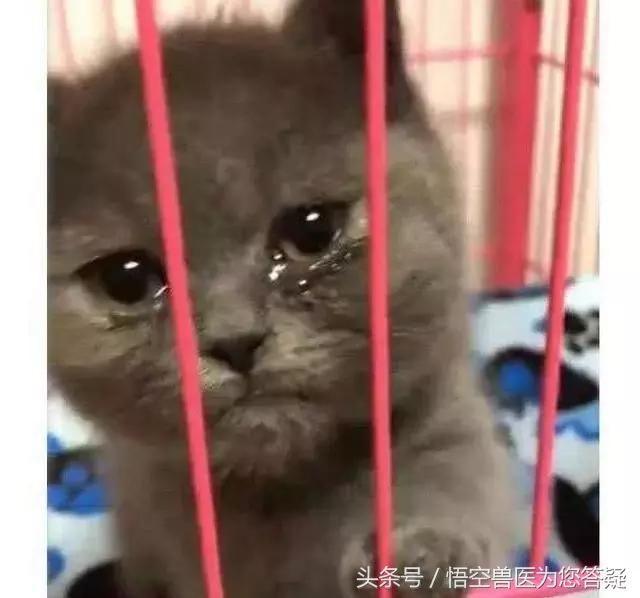 有些人喜欢聪明可爱的猫.有些人希望猫能帮助移除老鼠.