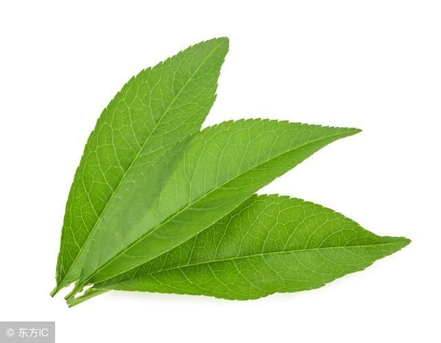 背景 壁纸 绿色 绿叶 树叶 植物 桌面 640_498