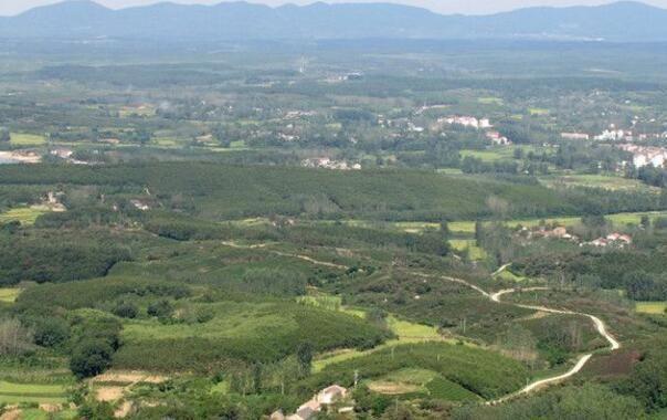 """""""在滁州皇甫山国家森林公园,66岁的老植树工人高青旺指着眼前的青山"""