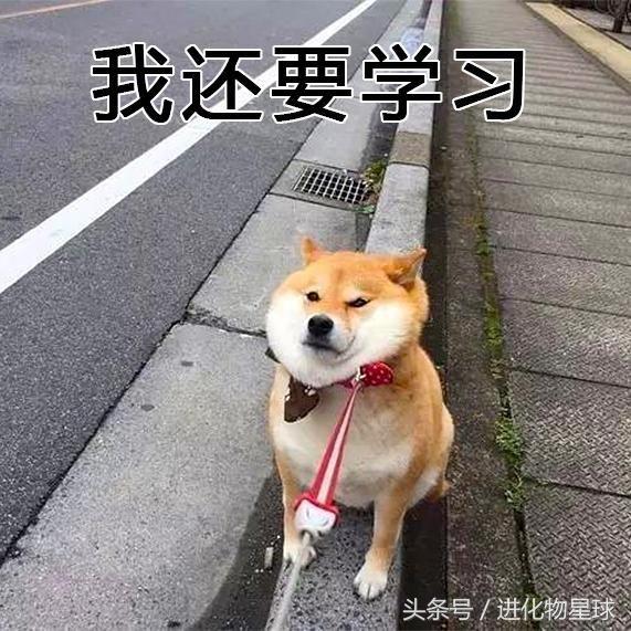 名人卡通已不足?一大波魔性柴犬向你袭来,请表情存量表情包