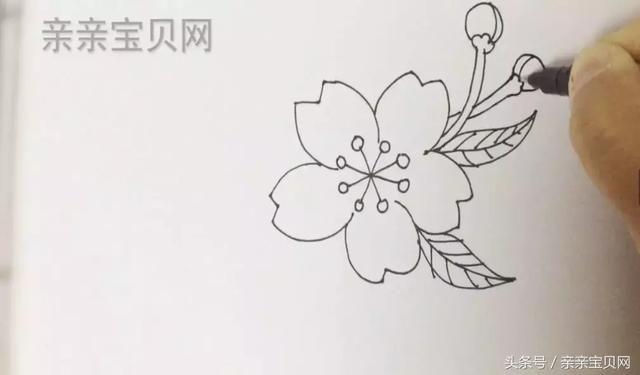 简笔画课堂 | 漂亮的桃花 no.20