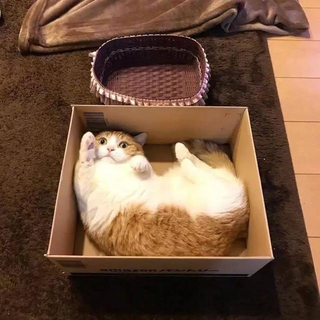 自制猫别墅纸箱