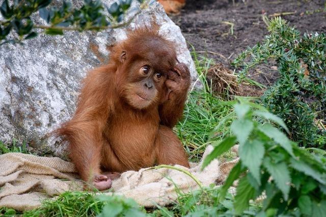 全球十大最受欢迎的动物园,中国一家上榜!