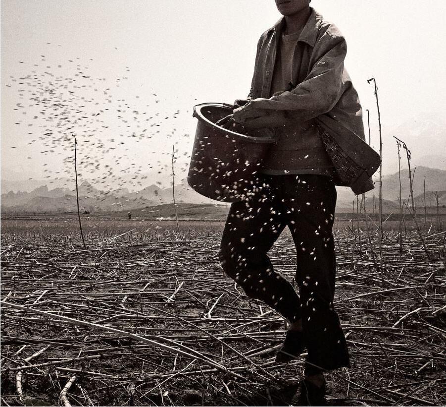 非洲人种玉米,都是撒的,抓一把,撒一片……不抛坑,不盖土,不浇水图片