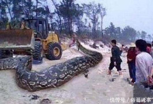 百年巨蟒惨死,几个月后群蛇报复,全家葬身蛇口
