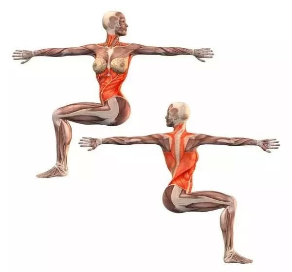 15个常见瑜伽体式解剖图,告诉你该体式锻炼哪里!图片