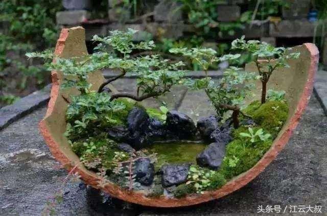 花盆,我的奶奶就是这样一个人,前段时间看到她竟然用碎瓦片来盆栽绿植图片