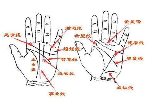 怎么看手相?手相的三条线分别代表什么?