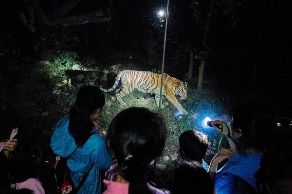 """森林探秘""""名额同样靠抢;上海野生动物园与房车住宿结合的夜游项目虽然"""