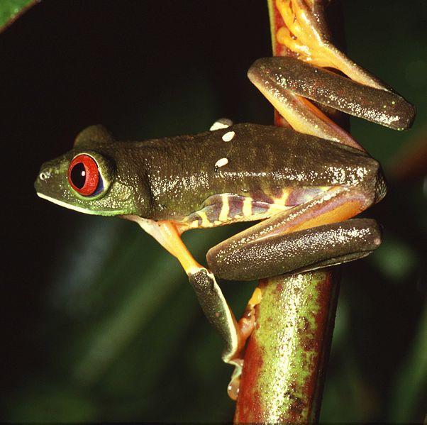 为什么从鱼类进化两栖动物后,动物的鳞片变成了没有鳞片的?(图2)  为什么从鱼类进化两栖动物后,动物的鳞片变成了没有鳞片的?(图4)  为什么从鱼类进化两栖动物后,动物的鳞片变成了没有鳞片的?(图6)  为什么从鱼类进化两栖动物后,动物的鳞片变成了没有鳞片的?(图12)  为什么从鱼类进化两栖动物后,动物的鳞片变成了没有鳞片的?