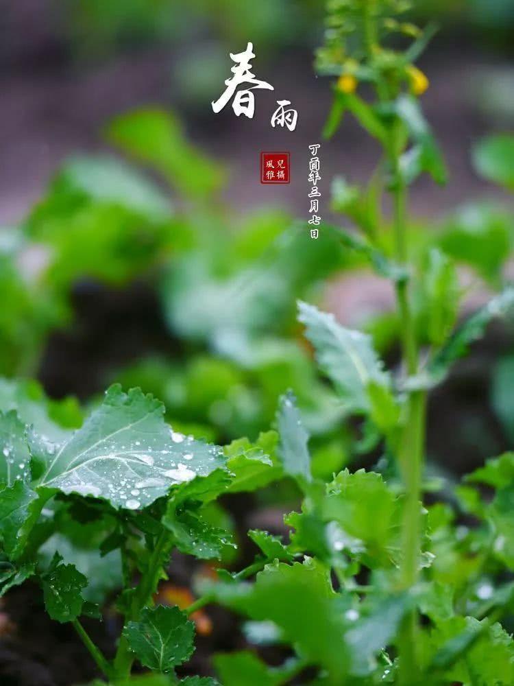 绿色,不仅是春天的主旋律,更是这个大自然的主色调.