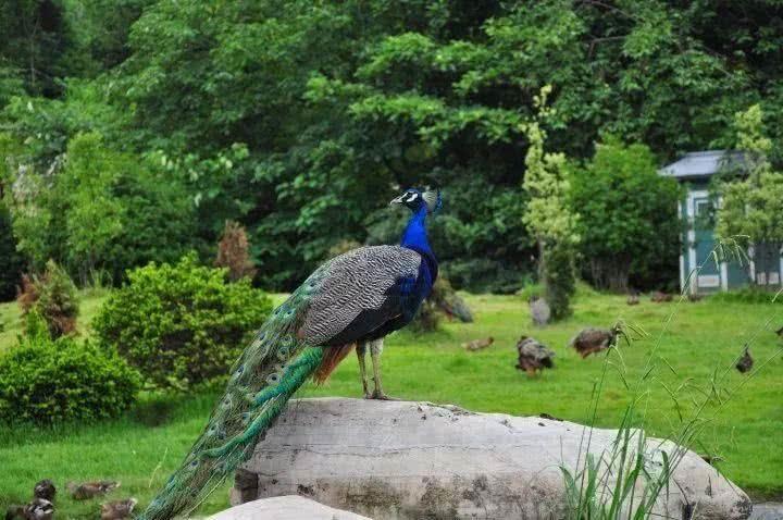 野生动物园是台州市人民喜爱的休闲旅游之地.