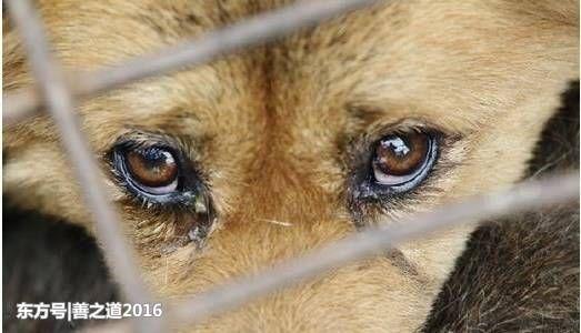 流泪动物伤感图片