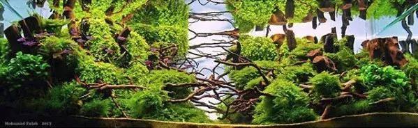 骨架很复杂的莫斯水草造景缸
