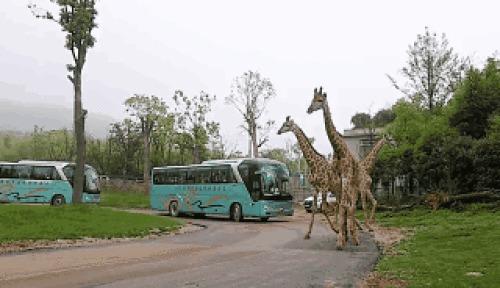 堪比杭州野生动物园!太湖龙之梦动物世界五一免费开放