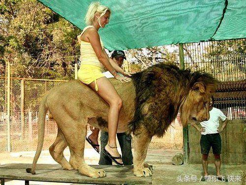 阿根廷疯狂动物园