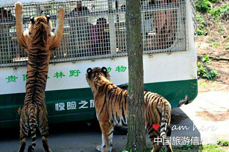 2018保护虎豹你我同行宣传活动在贵州贵阳野生动物园隆重举