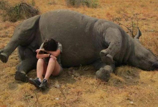 无力救援,野生动物工作者在死去的犀牛旁边哭泣.