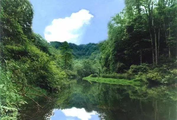 铜锣坝国家森林公园在云南省水富县太平镇境内, 距水富县城70公里.