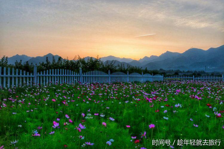 北京昌平七孔桥千亩花海美爆初夏