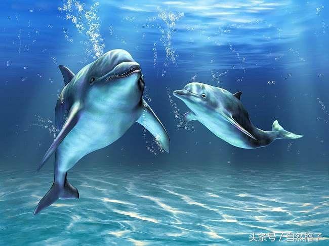 自然界7种动物的超能力:人类若有一种,结果不敢想象
