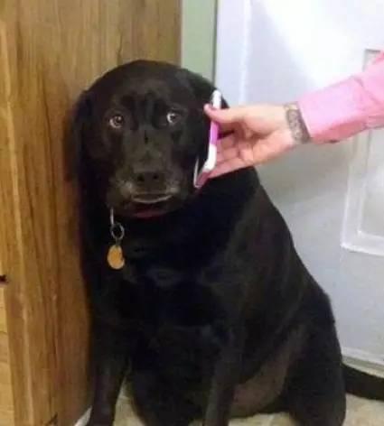 """"""" 突然开始心疼大黑狗了,委屈的表情太萌,好想抱回家.图片"""