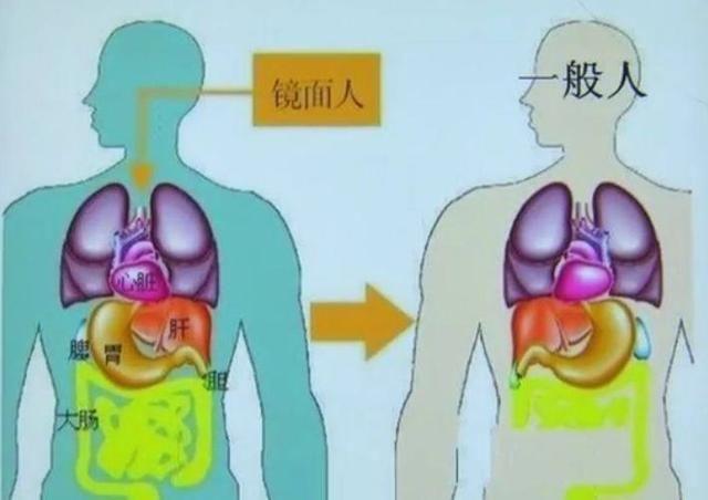 身体结构图五脏