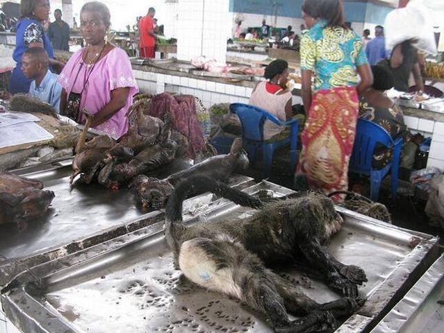 非洲人爱吃猴子,在非洲的菜市场里,你会看到很多小摊上摆着宰好的图片