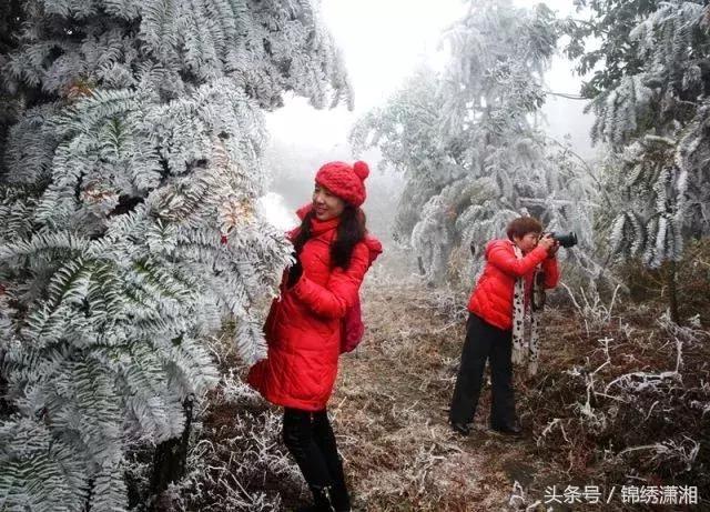 持续续的低温冰冻气,让湖南省衡阳市衡南县国家级森林公园岐山风景