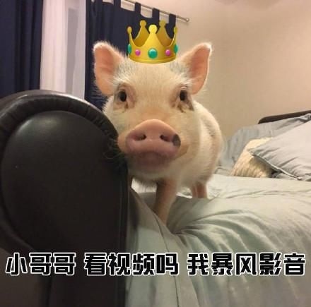 小猪猪网恋:小哥哥表情我萝莉音哧溜表情包哧溜熊猫图片