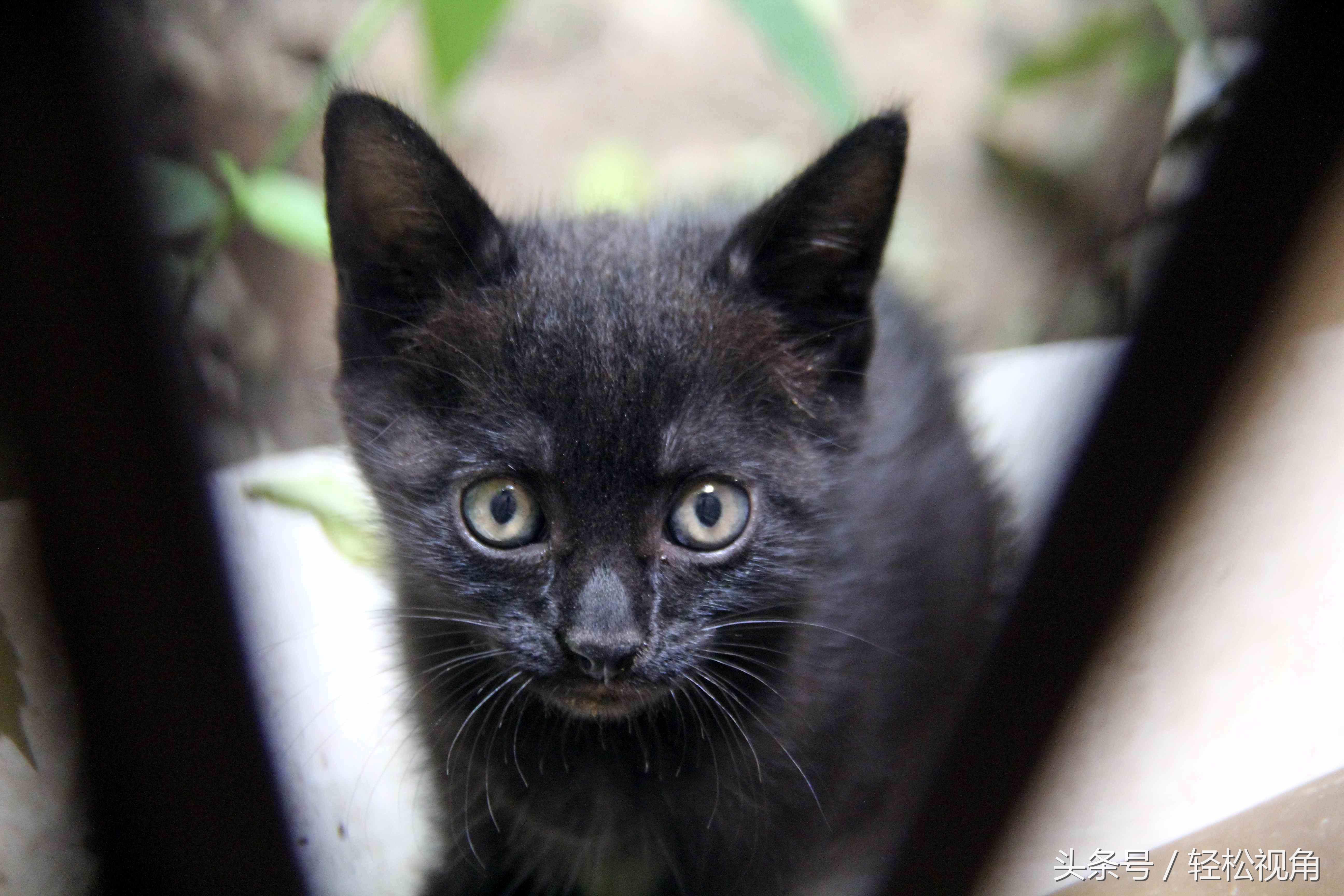 摄影师用一年时间拍摄一只流浪黑猫和它的孩子们,当妈妈它很称职