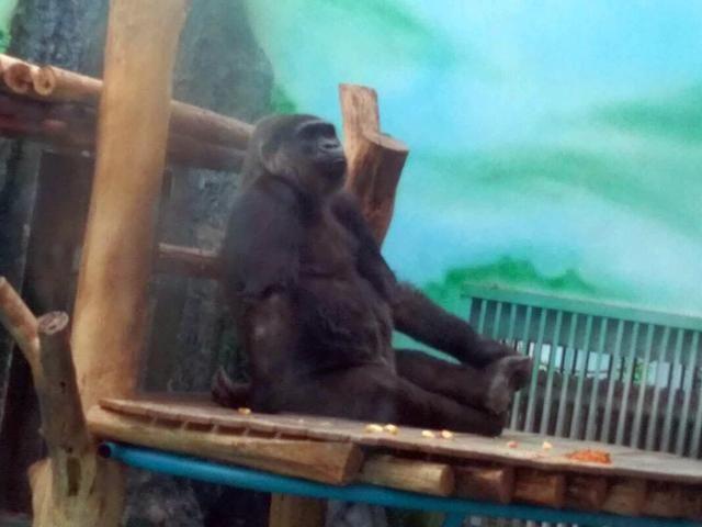 河南省郑州动物园