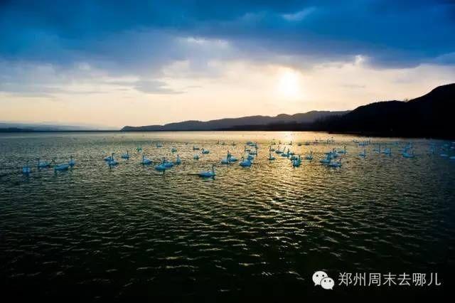 三门峡天鹅湖观看白天鹅旅游攻略