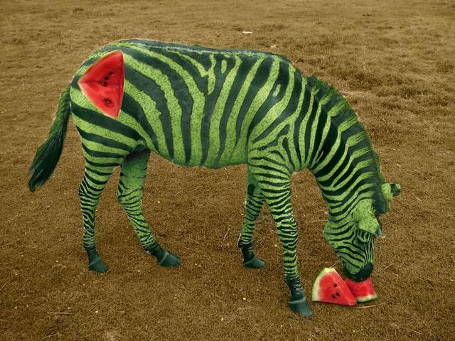 有人将水果和动物ps结合在了一起,画面太逼真!你敢下口吃吗?