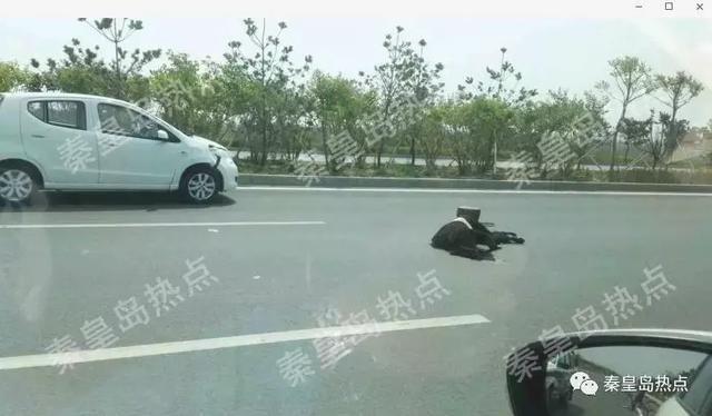 秦皇岛宁海大道一女子被撞身亡!