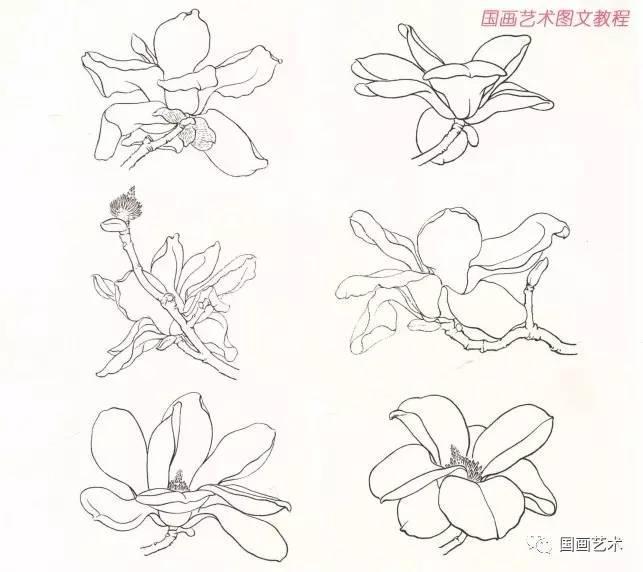 玉兰花的结构形态