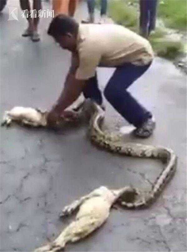 有人甚至同情蟒蛇,并批评这位农民救不了羊还把蛇也害死.