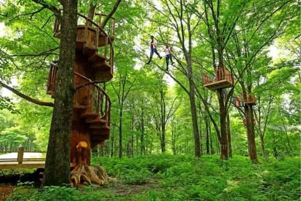 """""""不在森林里,就在去森林的路上!""""森林旅游正当时"""