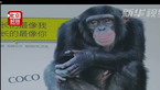 """动物明星海报让广州地铁站""""动""""起来"""
