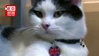 猫咪自己发推特?有人说它胖还瞬间不高兴了