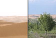 不用人工灌溉!看看沙漠如何变绿洲?!
