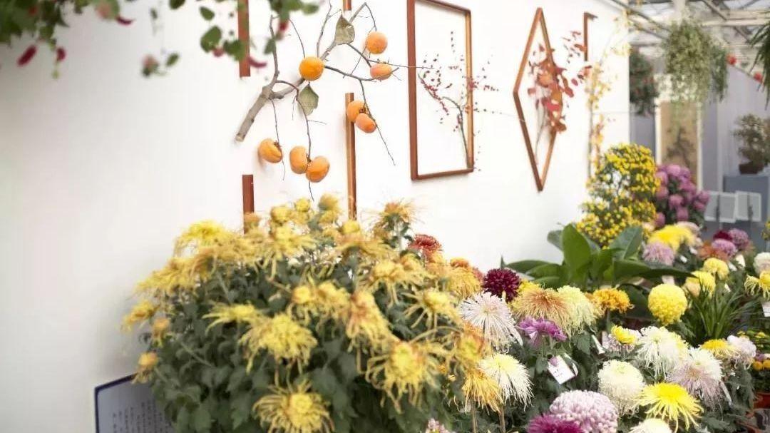 媲美北京植物园!全国最顶级的菊花竟在这个地方!还能看遍四季花草!