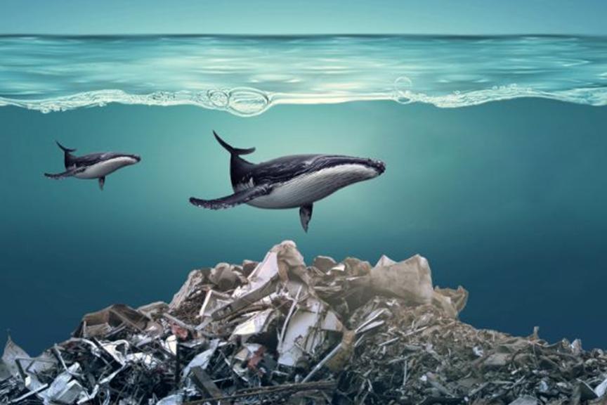 《海底小纵队》海洋知识大赛,趣味形式传播环保知识