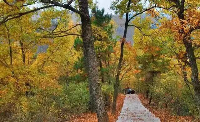 畅享低碳生活,住宿房车木屋、森林酒店!
